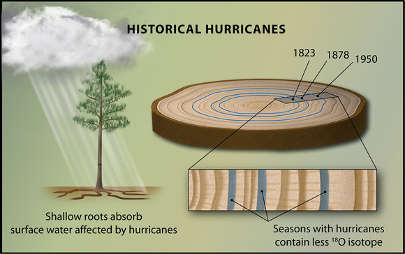 Tree Ring Evidence of Historical Hurricanes