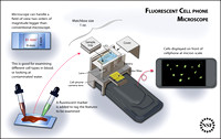 Cell phone fluorescent microscope