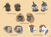 Five Species of Mangabey
